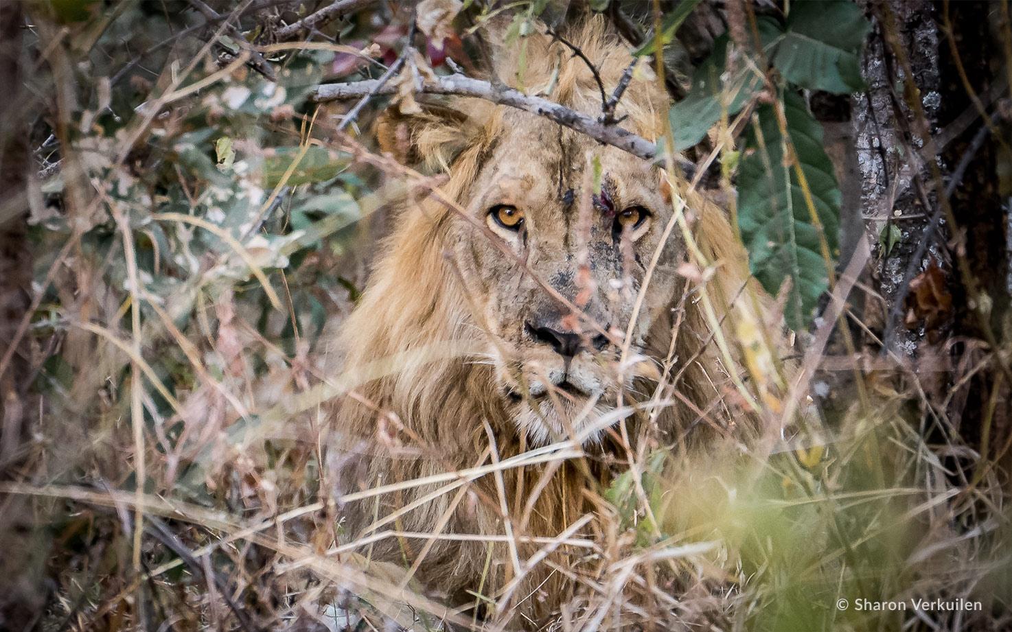 Sharon Verkuilen Luambe Camp 12 National Park Luangwa Valley Zambia