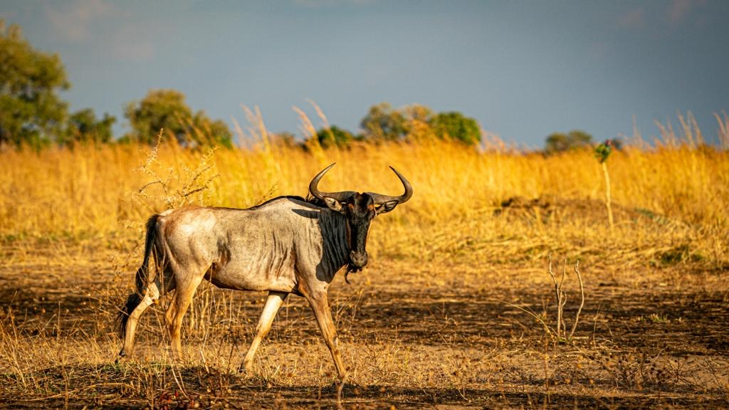 Luangwa Valley Luambe National Park Scenery Landscape