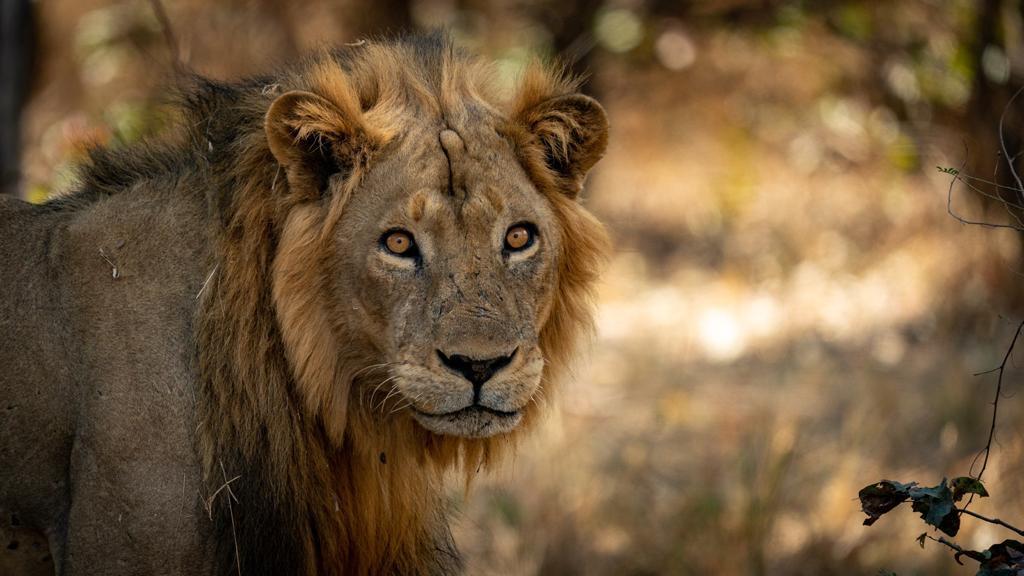 Luangwa Valley Luambe National Park