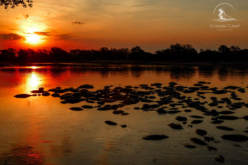 Michael Riffel Luambe Camp Luangwa Valley Hippos