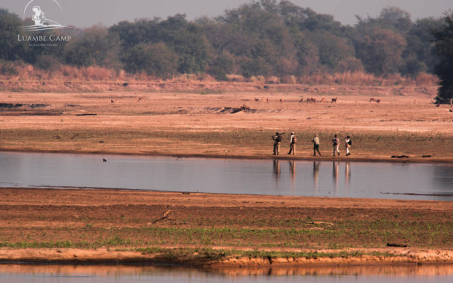 People walking along the Luangwa River in Luambe National Park