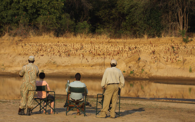 Morning coffee watching carmin bee eaters in Luambe National Park