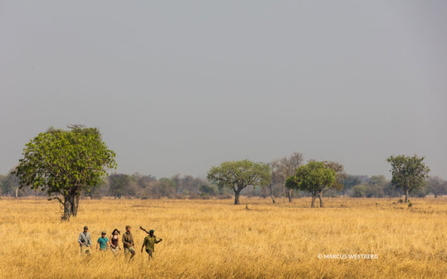 Walking through the Luambe National Park