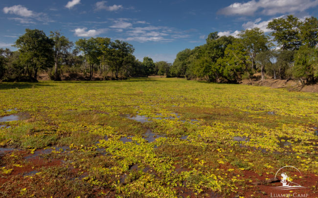 Luambe National Park - Scenery