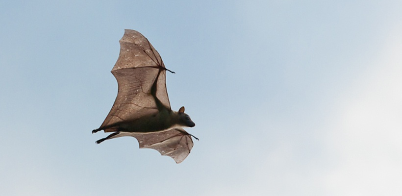 Bat Reasearch for the Luambe Conservation Project