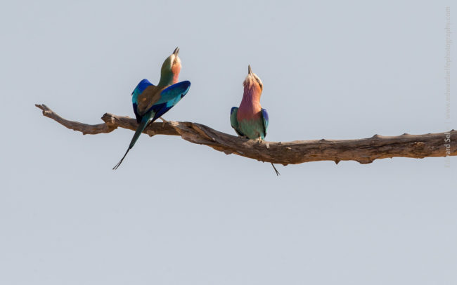 Luambe Conservation Project - Luangwa Valley - Conservation Activities - Birding and Widlife in the LUangwa
