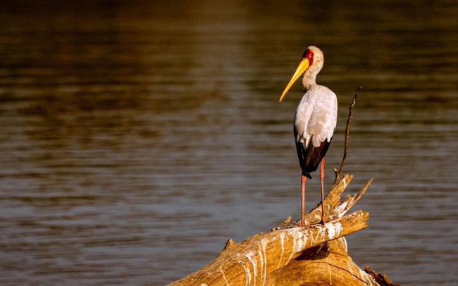 Luambe Conservation Project - Luangwa Valley - Luangwa Valley Activities - Birding and Wildlife